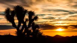 Time Lapse - Sunrise over Joshua Tree with Beautiful Cloudscape