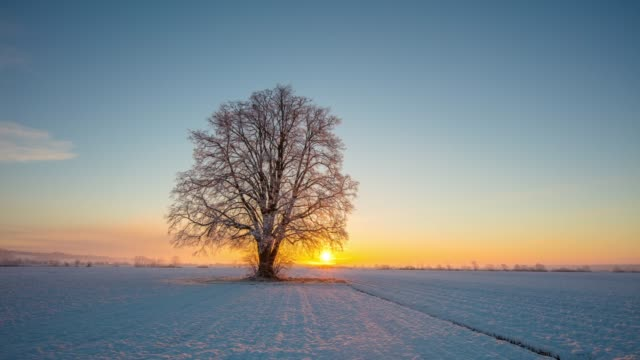 ws time lapse sunrise over tranquil,idyllic single tree in snow covered field,slovenia, prekmurje - sunny stock videos & royalty-free footage
