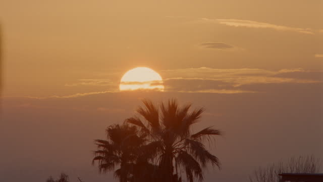 time lapse sunrise with silhouette of palm tree in foreground