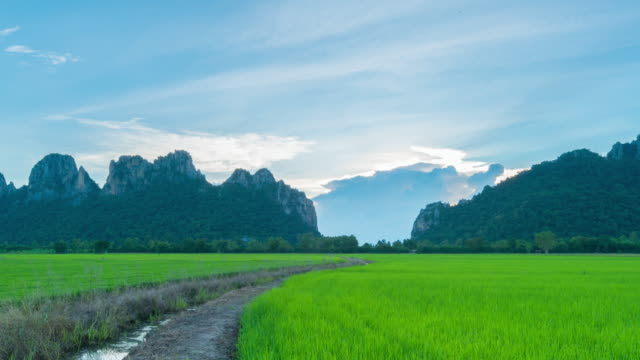 4K Time lapse : sunset agricultural paddy Rice in northern Thailand