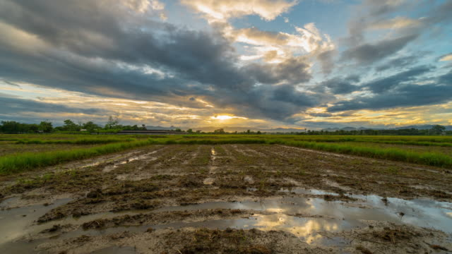 4K Time lapse : Sunset at rice field preparation with clouds in water reflection.