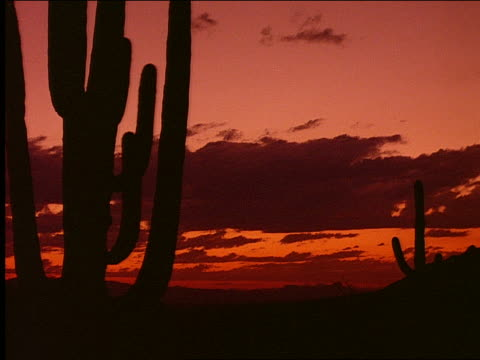 time lapse sunset over desert with silhouette of cactus in foreground - cactus silhouette stock videos & royalty-free footage