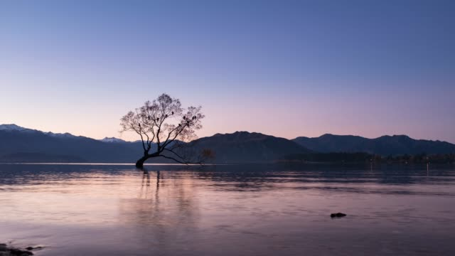 4k time lapse : that wanaka tree in the morning, new zealand. - pastel stock videos & royalty-free footage