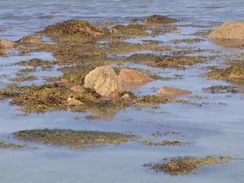 time lapse, tide retreating from beach, channel islands, uk - tidal pool stock videos and b-roll footage