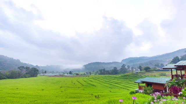 Time Lapse Video of Beautiful Rice Terrace with Moving Mist and Cloud on Mountain as Background, Chaingmai, Thailand.