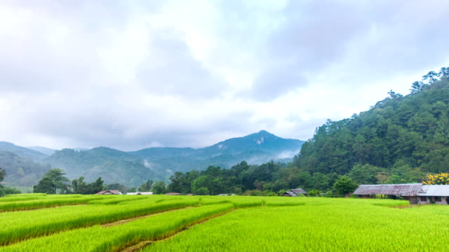 Time Lapse Video of Beautiful Rice Terrace with Moving Mist on Mountain as Background.