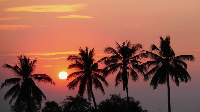 Tijd lapse weergave van kokosnoot boom met tijdens bij zonsondergang.