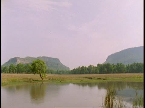 wa time lapse view of lake, bandhavgarh national park, india - national icon stock videos & royalty-free footage