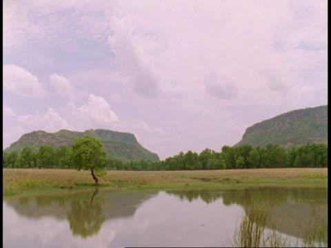 wa time lapse view of lake, bandhavgarh national park, india - bandhavgarh national park stock videos and b-roll footage
