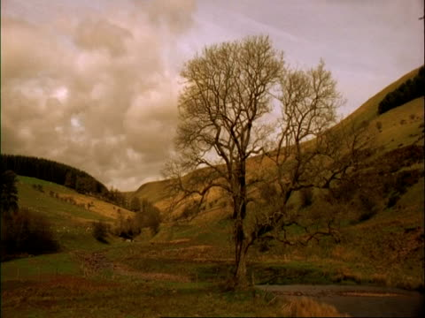WA time lapse view of mountains and clouds, tree in foreground, Brecon Beacons, Wales