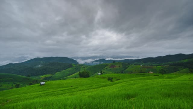 time lapse view shot of rice field terrace and sea of fog in mountain tilt up at pa pong piang, chiang mai, thailand. stock video 4k - tobacco product stock videos & royalty-free footage
