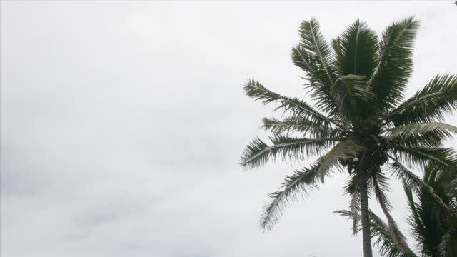 time lapse white clouds sail across a tropical blue sky. - fan palm tree stock videos & royalty-free footage