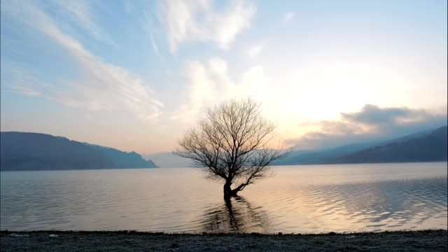 Time Lapse, Wide Shot of a Seascape at Sunrise, a Single Tree in the Water, Morning, Travel Destinations, New Zealand, Beauty in Nature