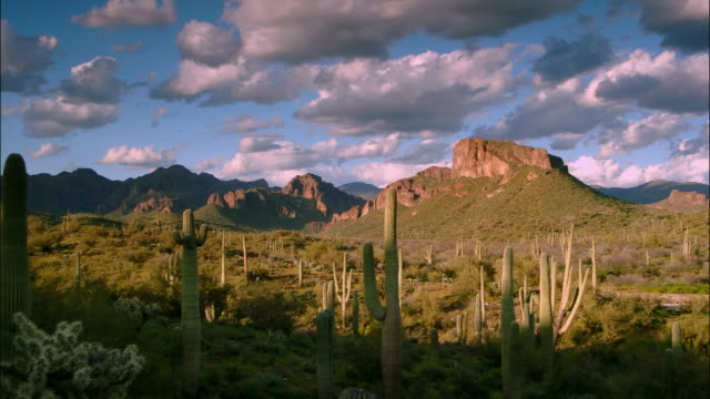 vídeos de stock e filmes b-roll de time lapse wide shot pan clouds passing over cactus in saguaro national park / arizona - cato