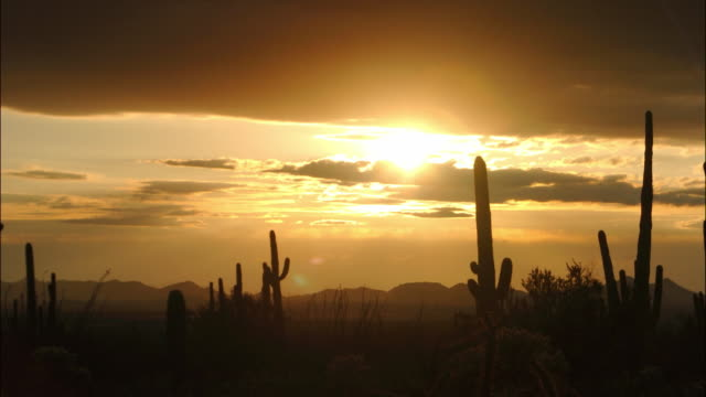 time lapse wide shot pan clouds passing over cactus in the saguaro national park / dusk to night / arizona - arizona cactus stock videos & royalty-free footage