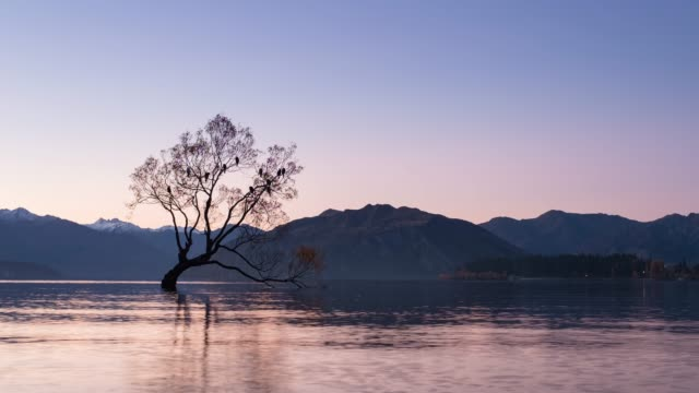 4k time lapse zoom out : that wanaka tree, new zealand. - pastel stock videos & royalty-free footage