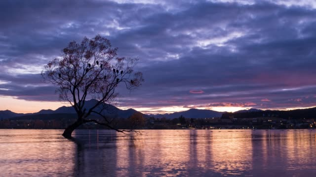 4k time lapse zoom out : wanaka tree at sunrise, new zealand. - zoom out stock videos & royalty-free footage