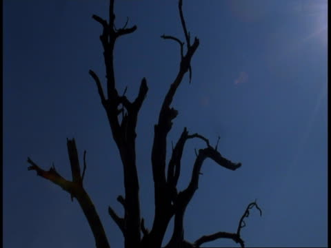 ms time laspe nightfall, silhouetted tree against blue sky, india - branch stock videos & royalty-free footage