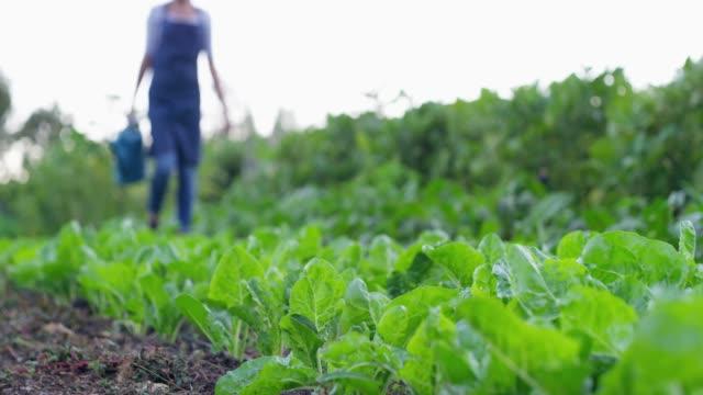 vidéos et rushes de il est temps d'arroser ces bébés - agriculteur