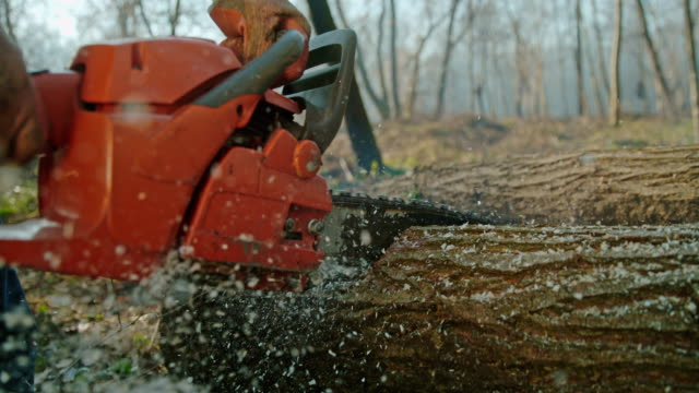 slo mo (time warp) chainsaw cutting into a tree trunk - forestry industry stock videos & royalty-free footage