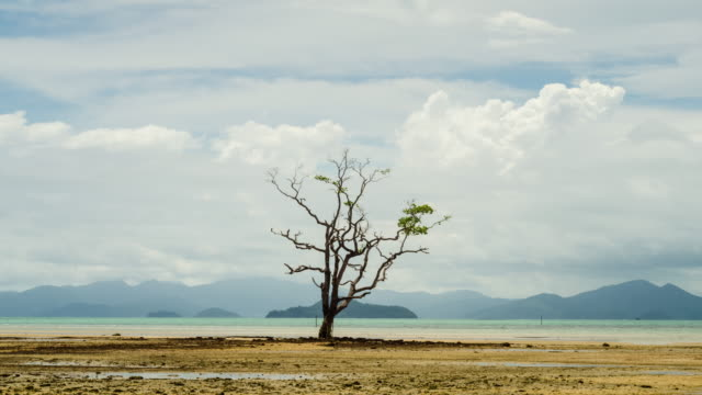 timelapse 4k - alone tree in tropical sea area. - tropical tree stock videos & royalty-free footage
