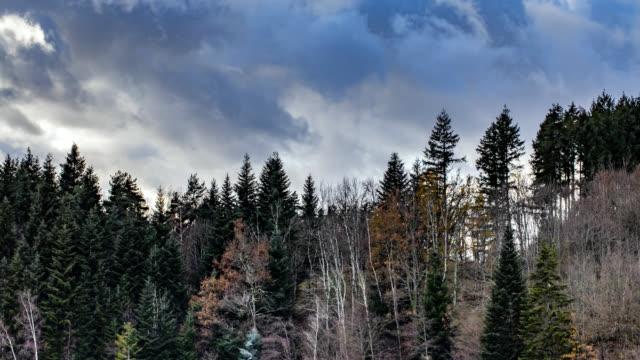 vidéos et rushes de timelapse 4k of forest and sky - vincent pommeyrol