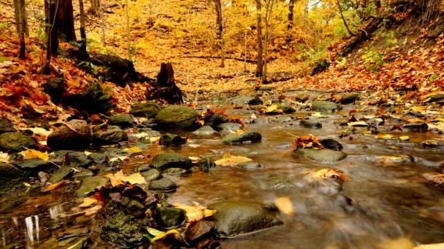 タイムラプス :赤と黄色の森に流れる流れ - カバノキ点の映像素材/bロール