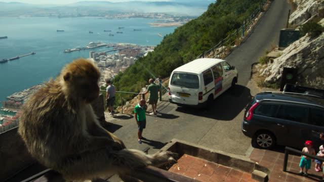 timelapse barbary macaque watches tourists on the rock of gibraltar - gibraltar bildbanksvideor och videomaterial från bakom kulisserna