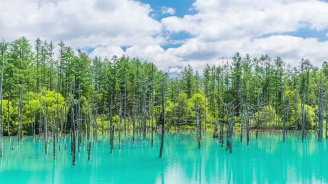 Timelapse beautiful Blue Pond (Aoiike) with reflection cloud and blue sky in Biei, Hokkaido Japan
