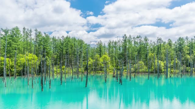 vídeos de stock e filmes b-roll de timelapse beautiful blue pond (aoiike) with reflection cloud and blue sky in biei, hokkaido japan - famous place