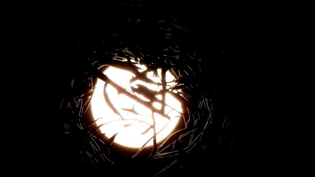 stockvideo's en b-roll-footage met timelapse close up of bright full moon rising behind silhouette leaves in hd - shaky