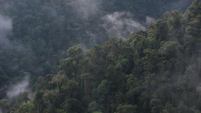 timelapse cloud billows over rainforested ridge, ecuador - ecuador stock videos & royalty-free footage