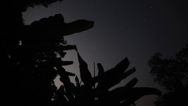 Timelapse clouds and stars drift over banana (Musa) plants, Htamanthi, Myanmar