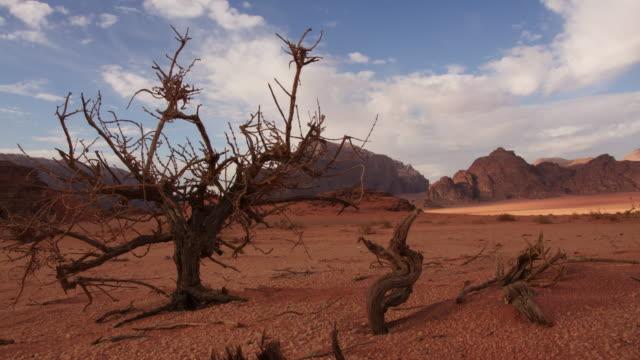 stockvideo's en b-roll-footage met timelapse clouds and sun drift over bush in desert, wadi rum, jordan - boomstronk