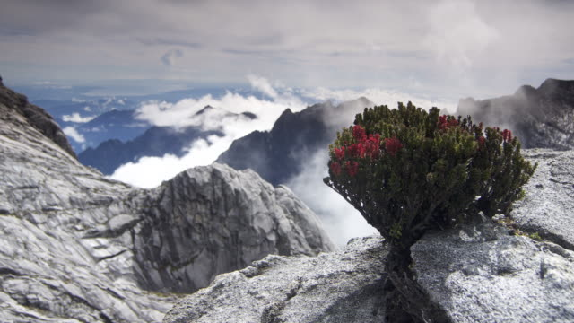 timelapse clouds billow over rocky peak and flowering bush, mount kinabalu, borneo - borneo stock-videos und b-roll-filmmaterial