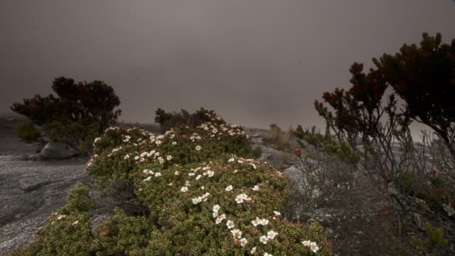 timelapse clouds billow over rocky peak and flowering bush, mount kinabalu, borneo - sabah state stock videos and b-roll footage