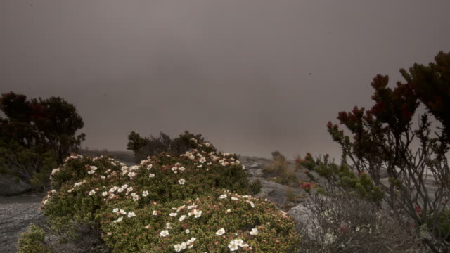 vídeos de stock, filmes e b-roll de timelapse clouds billow over rocky peak and flowering bush, mount kinabalu, borneo - terreno extremo