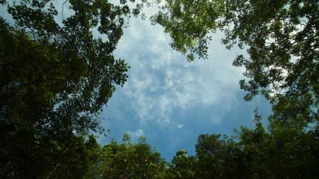"""""""timelapse clouds drift over forest clearing, philippines"""" - tree canopy stock videos and b-roll footage"""