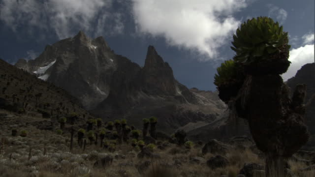 Timelapse clouds scud over mountains and giant groundsels (Dendrosenecio), Mount Kenya, Kenya