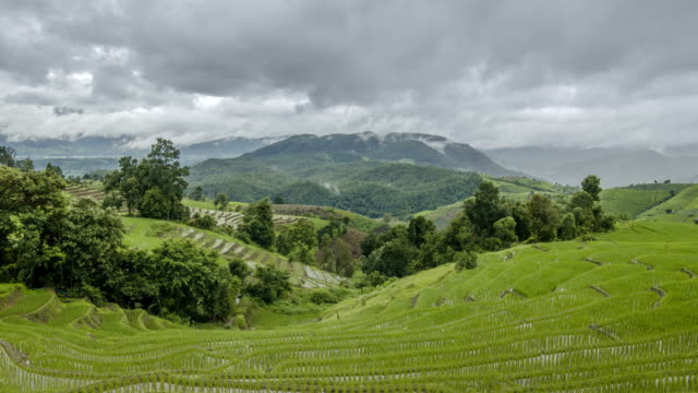 Timelapse: cloudy storm is coming to rice terrace