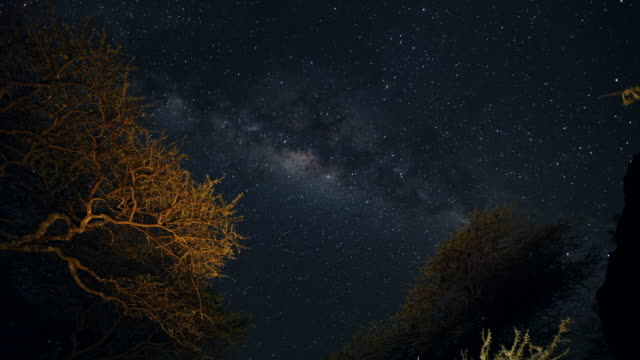 timelapse constellations moving over trees on serengeti - dark blue stock videos & royalty-free footage