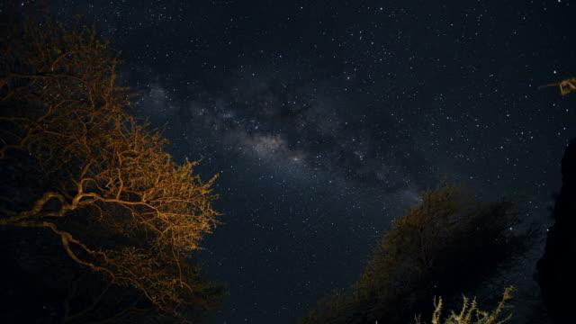 vídeos y material grabado en eventos de stock de timelapse constellations moving over trees on serengeti - azul oscuro