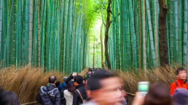 timelapse menschen an arashiyama bambuswald voll - wäldchen stock-videos und b-roll-filmmaterial