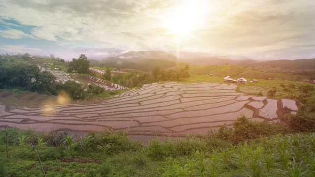4k time-lapse day to dusk: rice field terrace in organic system at ban pa pong village, thailand. - day to dusk stock videos & royalty-free footage