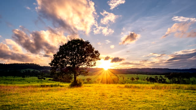 timelapse day to night : solitary tree at sunset - day to night stock videos & royalty-free footage