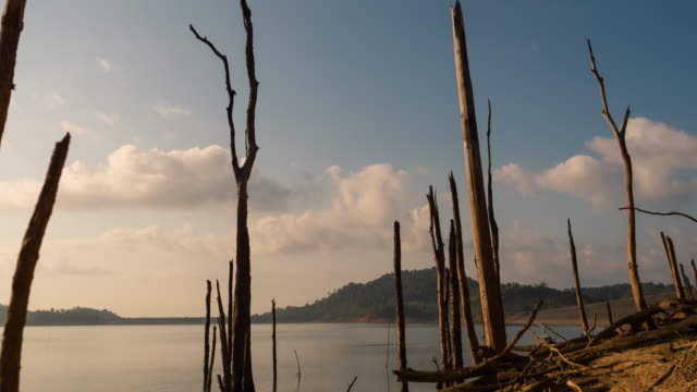 4k timelapse : dead tree, lake and mountain - 枯れた植物点の映像素材/bロール