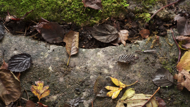 timelapse earthworms (lumbricus terrestris) pull leaf litter underground in garden, uk - worm stock videos and b-roll footage
