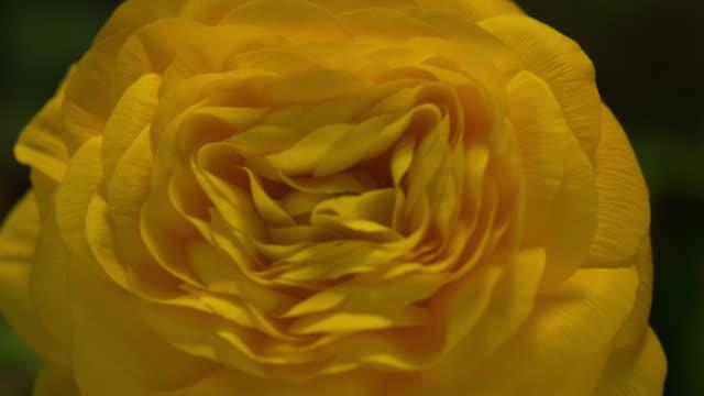 Timelapse flower