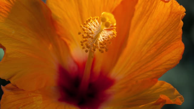 timelapse flowers - naples florida stock videos & royalty-free footage