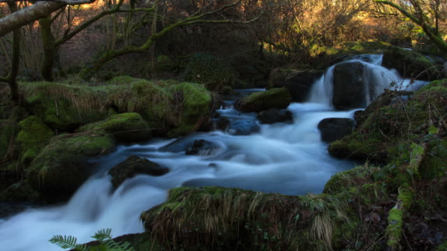 vídeos de stock e filmes b-roll de time-lapse flowing stream in evening sunlight as camera pulls back. long exposures on water - long exposure